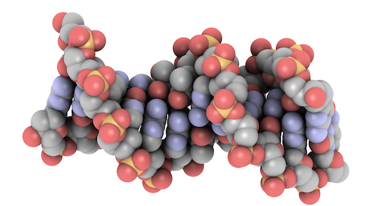 How does the accessibility of DNA affect the expression of genes?