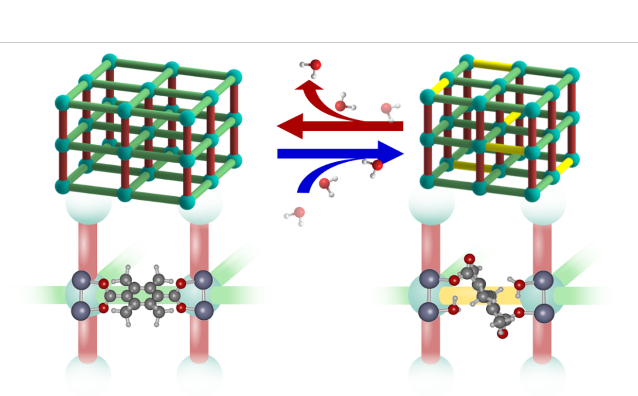 Loading-dependent water effects on the structural properties of water stable MOFs